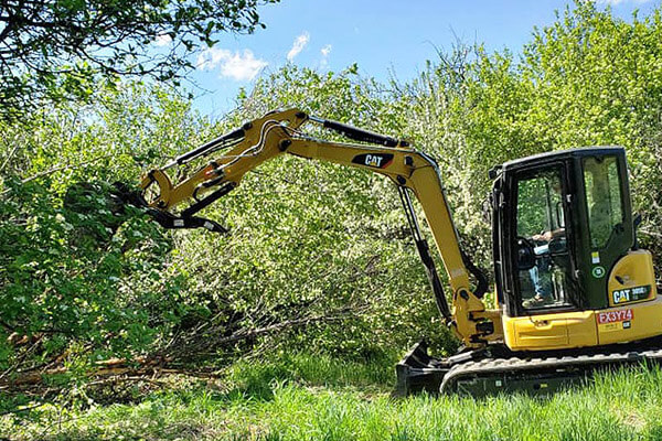 Tree Removal, Land Clearing & Backhoe Services